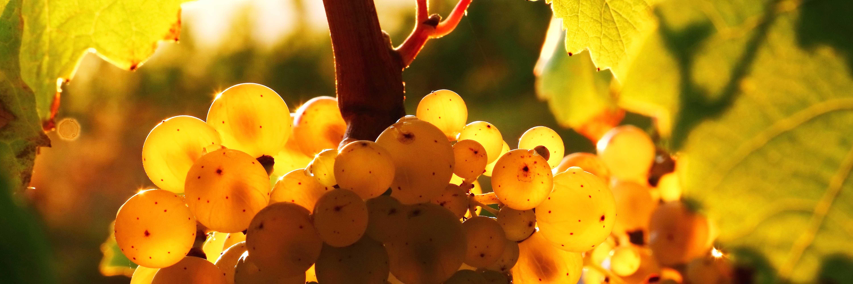 Vins, champagne et spiritueux vous attendent à la Cave Roosevelt (Lyon 6)