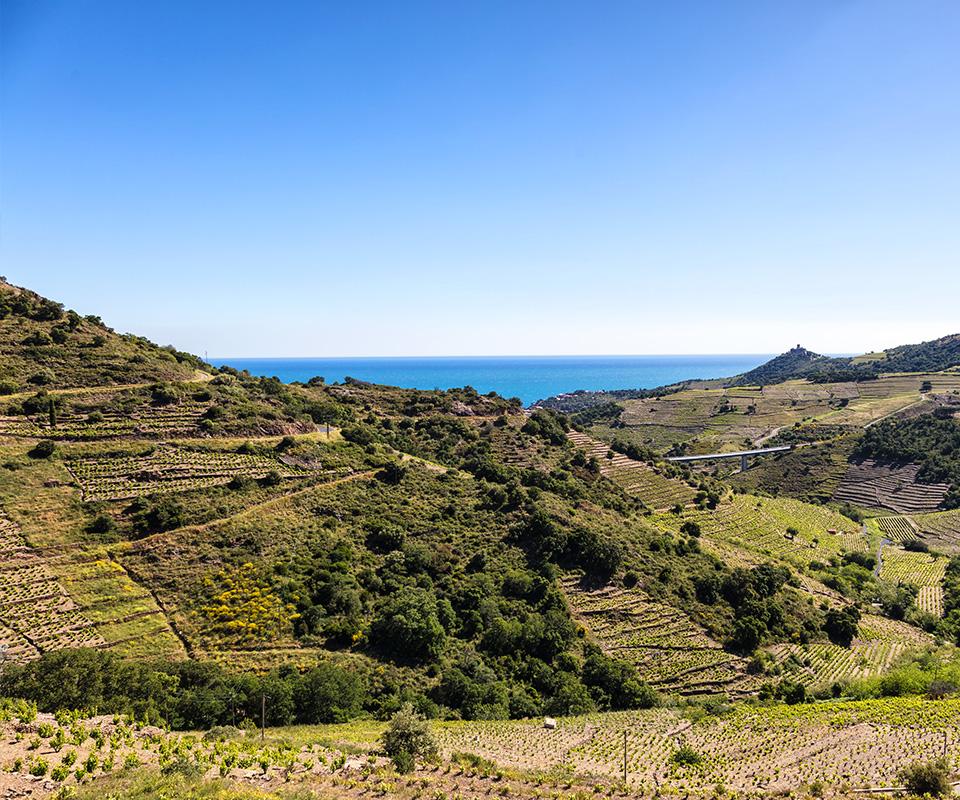 Les meilleurs vins du Languedoc-Roussillon sont à la Cave Roosevelt (Lyon 6)