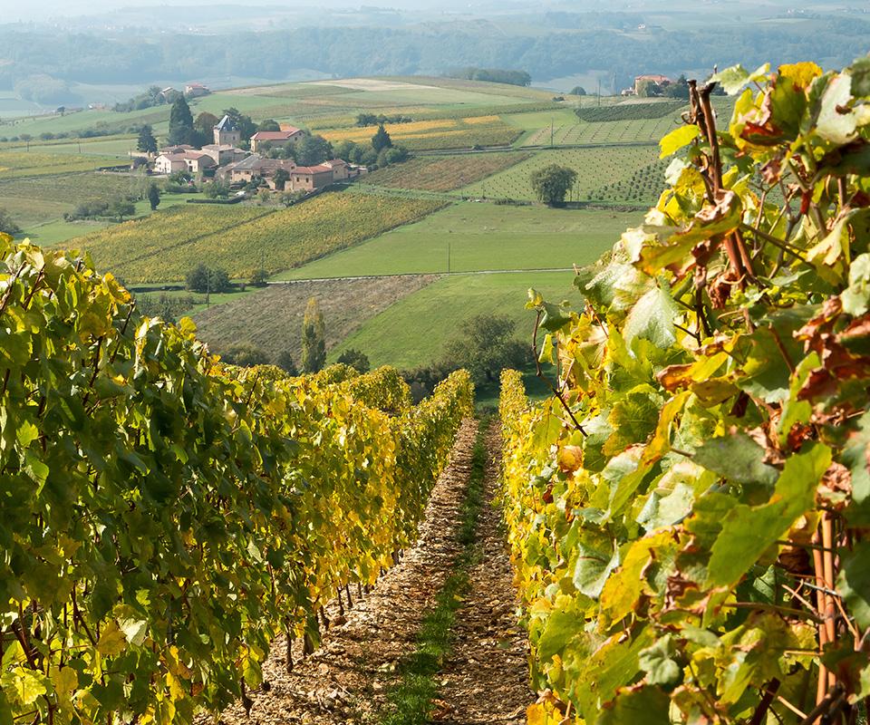 Les meilleurs vins du Beaujolais sont à la Cave Roosevelt (Lyon 6)